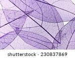 decorative skeleton leaves... | Shutterstock . vector #230837869