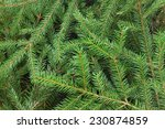 Fir Tree Branch Background...