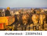Amish Farmer Behind Team Of...
