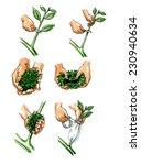 planting seedlings plants.... | Shutterstock . vector #230940634