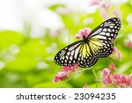 Stock photo butterfly on a flower 23094235