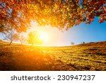 colorful autumn landscape.... | Shutterstock . vector #230947237