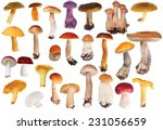 Set Of Edible Mushrooms...