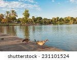 Lake With Ducks In The Yarkon...