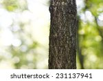 tree trunk isolated from...