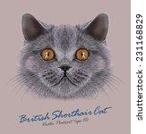 vector portrait of british...   Shutterstock .eps vector #231168829