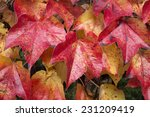 colors of fall leaf frame.... | Shutterstock . vector #231209419