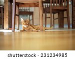 Red Cat Lying On The Floor Hea...