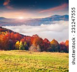 colorful autumn morning in the... | Shutterstock . vector #231247555