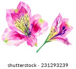 Exotic Flowers Isolated On...