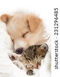 Stock photo puppy and kitten sleeps 231296485