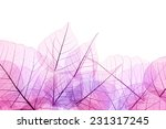 Pink And Purple Border Of...