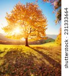 majestic alone beech tree on a... | Shutterstock . vector #231333664