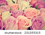 Stock photo pink and white roses background shallow depth of field retro vintage instagram filter 231355315