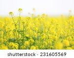 wild green plants close up | Shutterstock . vector #231605569