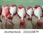 Bright Coloured Red Reef Fishe...
