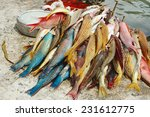 Brith Coloured Reef Fishes....