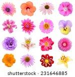 set of sixteen flower heads... | Shutterstock . vector #231646885