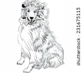 Vector Sweet Dog Rough Collie...