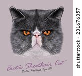 Exotic Shorthair Cat Animal...