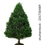 Single Pine Tree Isolated On...