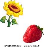 vector strawberry  sunflower...   Shutterstock .eps vector #231734815