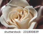 photo of a beautiful flower | Shutterstock . vector #231800839