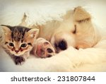 Stock photo kitten and puppy 231807844