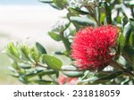 Pohutukawa Flower New Zealand...