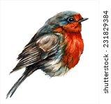 Robin Bird  Watercolor Paintin...