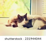 Stock photo cat and dog at the window 231944044