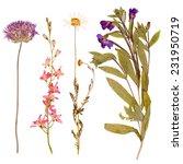 Set Of Wild Dry Flowers Presse...