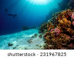 lady free diver swimming... | Shutterstock . vector #231967825