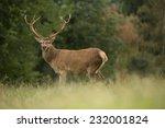 portrait of majestic powerful... | Shutterstock . vector #232001824