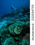 Small photo of Diver and various coral reefs in Derawan, Kalimantan, Indonesia underwater photo. There are hard coral Montipora species.