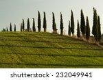 cypress trees in a green field... | Shutterstock . vector #232049941