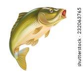 carp fish vector illustration | Shutterstock .eps vector #232063765