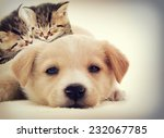 Stock photo kittens and puppy sleeping 232067785