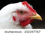portrait of a white broiler... | Shutterstock . vector #232247767