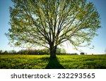 Sun Shining Through Oak Tree...