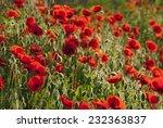 poppy flowers blooming in... | Shutterstock . vector #232363837