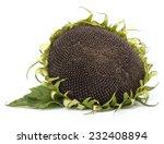 Sunflower Head Isolated On...