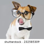 Adorable Stylish Clever Dog...