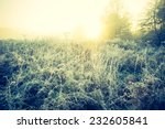 vintage photo of frosty meadow... | Shutterstock . vector #232605841