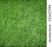 beautiful green grass texture | Shutterstock . vector #232637989