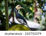 oriental pied hornbill | Shutterstock . vector #232752379