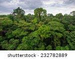 amazon rainforest in tambopata... | Shutterstock . vector #232782889