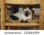 Siamese Cat Lounging On Dining...