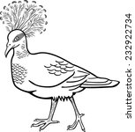 victoria crested pigeon | Shutterstock .eps vector #232922734