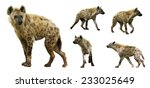 set of spotted hyenas  crocuta... | Shutterstock . vector #233025649